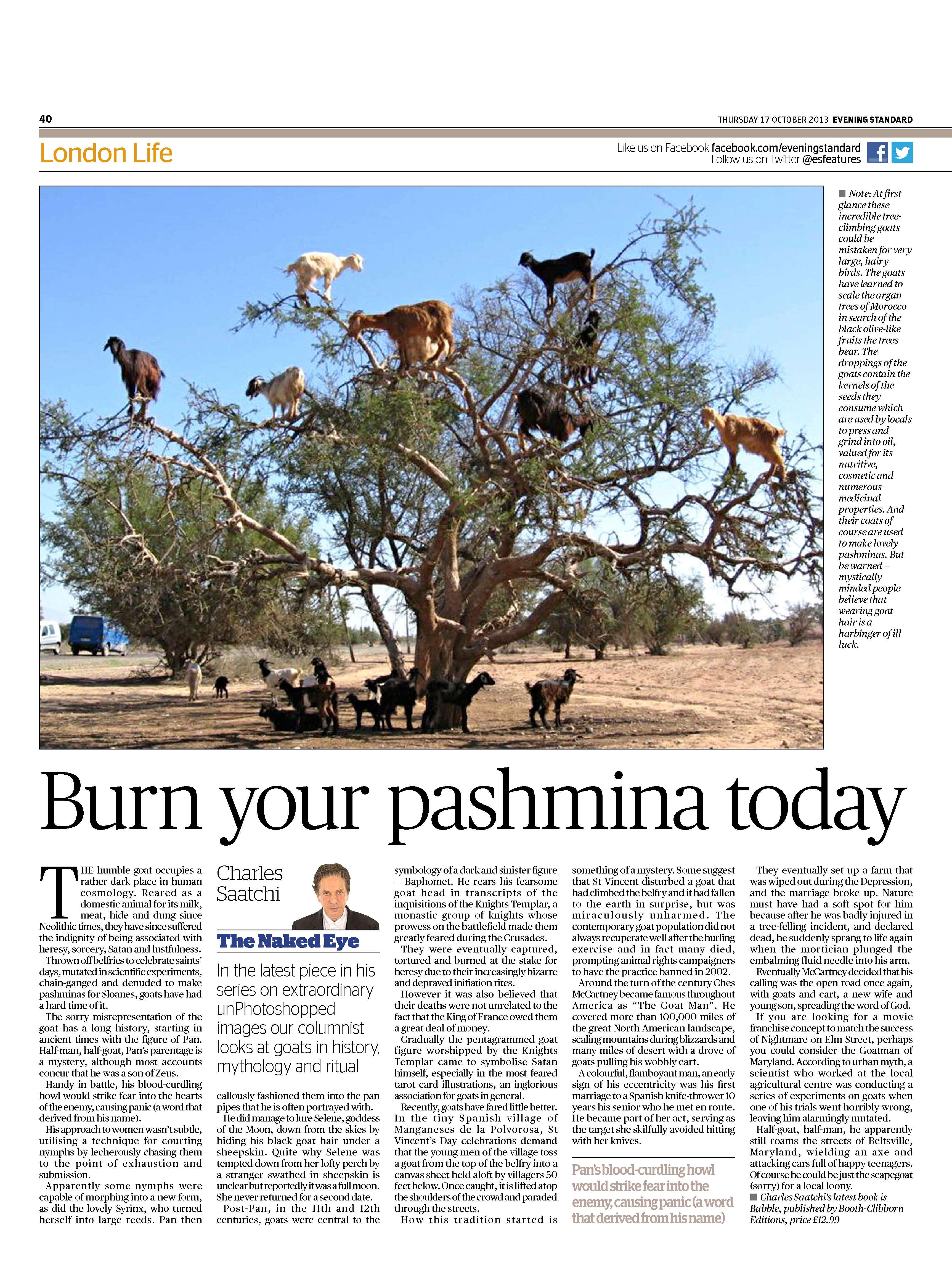 Burn your pashmina