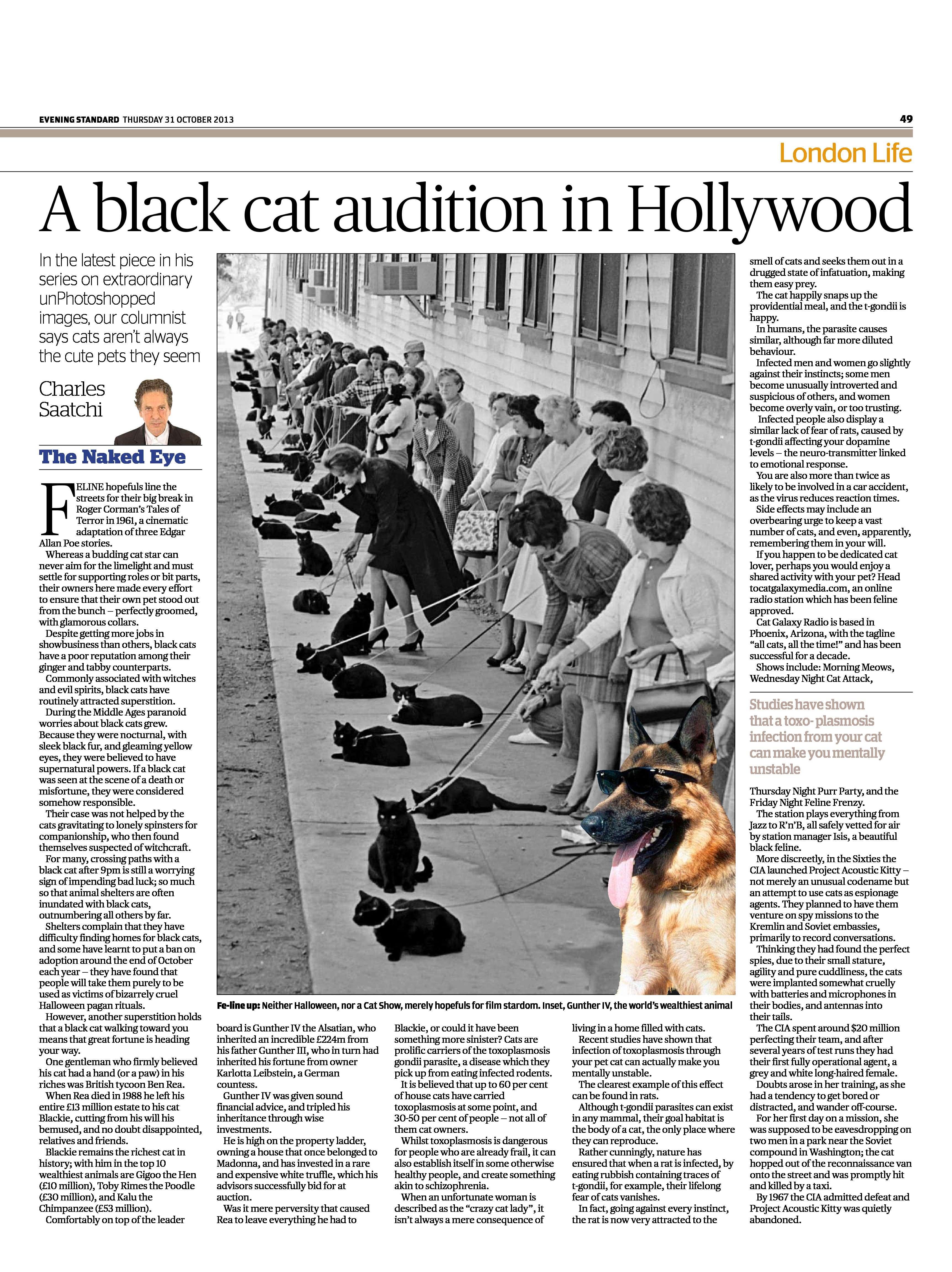 A black cat audition